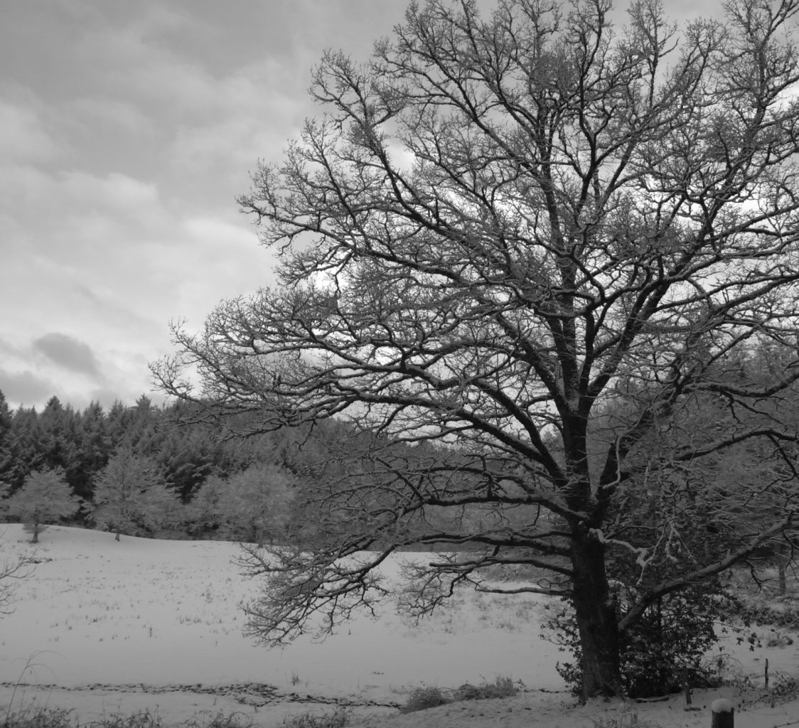 2012 winter B&W 223_816